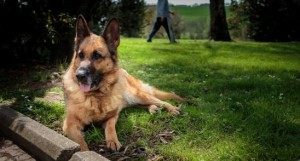 cane margot blog pensieri parole