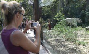 virginia raggi zoo roma bioparco