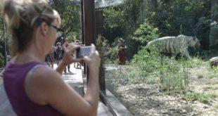 Cara Virginia Raggi, siamo i ragazzi dello Zoo di Roma